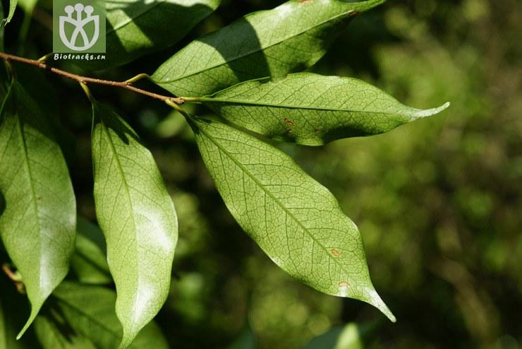 背景 壁纸 绿色 绿叶 树叶 植物 桌面 740_494图片